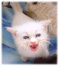 How to raise an orphaned Kitten - New Kitty Info