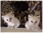 Kittenbaby.com Photo Album and Picture Gallery